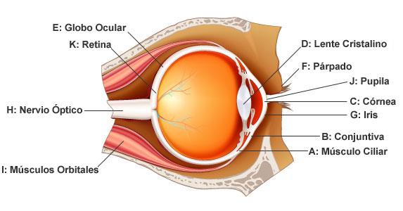 cuidado de los ojos de pearle vision